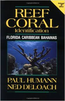 REEF CORAL IDENTIFICATION: FLORIDA CARIBBEAN